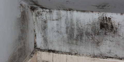 Whether It S The Result Of A Hidden Leak Or Flood Damage Black Mold Can Cause Grave Problems For Your