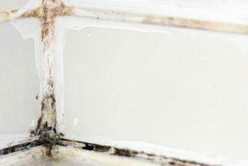 white mold