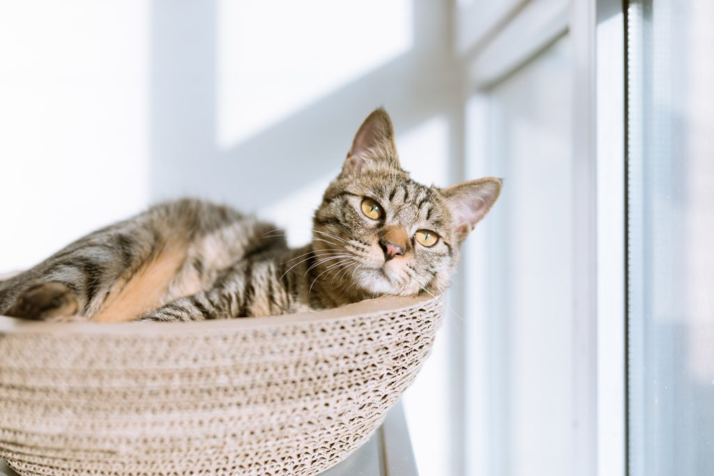 A brown cat bathing in sunlight while lounging in a basket. Remove cat odors from your home.